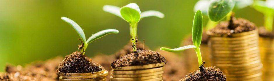 muntstukken waar planten op groeien