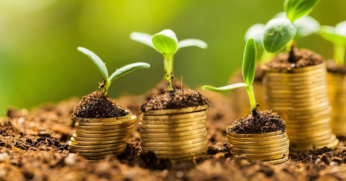 plantjes groeien bovenop geldmunten